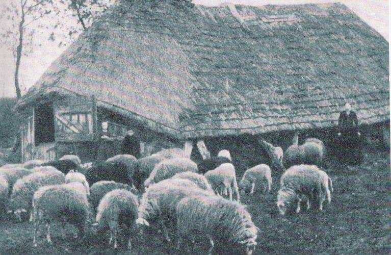 1915 Berendina, Hendrik en Aaltje